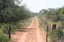 Beloved Kalahari