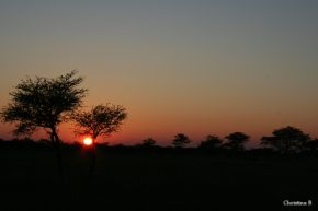 Sonsopkoms in die Kalahari