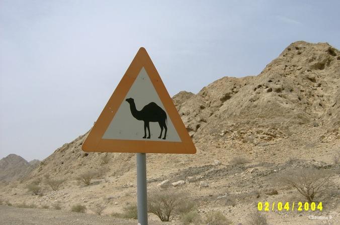 'n Kameel waarskuwingsbord naby Dubai