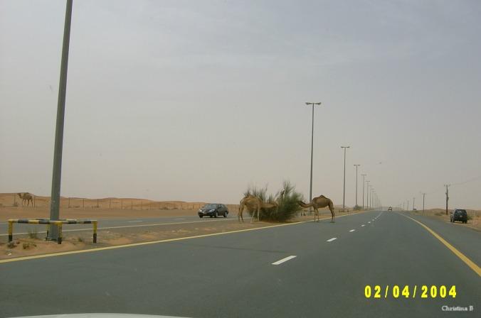 'n Hoofpad buite Dubai - net nadat ons die kameel waarskuwingsbord gesien het.