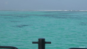 View towards the reef off the glass bottom boat.