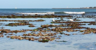 Low tide at Waterman's Bay north of Perth