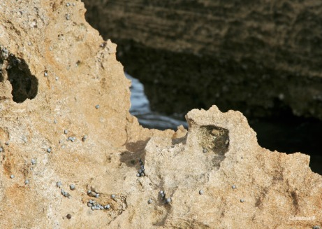Weathered rocks with shells attached to them