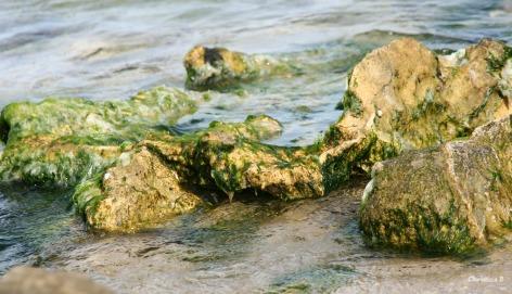 Rocks and moss at a local beach near Perth