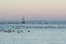 Paddlers and support boats waiting for their swimmers with Rottnest Island in the background