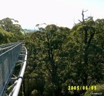 """'n Deel van die """"Treetop Walk"""", geneem in 2005 tydens ons eerste besoek"""