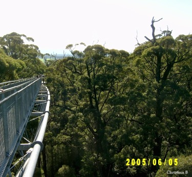 "'n Deel van die ""Treetop Walk"", geneem in 2005 tydens ons eerste besoek"