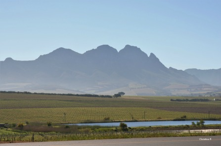 Simonsberg and some vineyards in spring