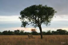 Kalahari peace