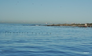 Southern tip of Robben Island