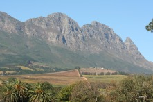 Simonsberg taken from Fairview wine & cheese farm