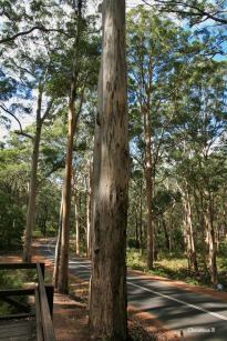 Forest in south west Australia